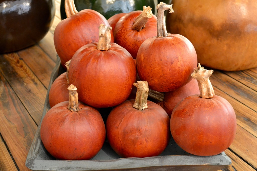 pumpkinpatch-myvegtable